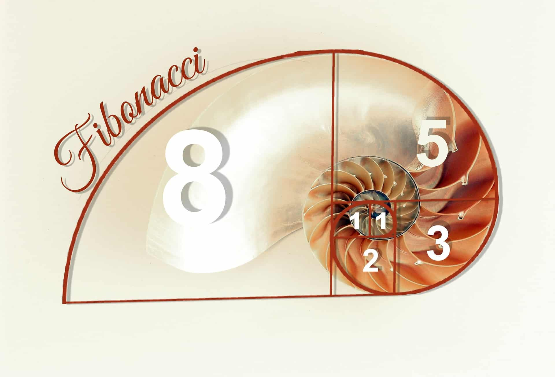 fibonacci-golden-ratio-seashell-gaia-meditation