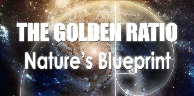 the golden ratio: nature's blue print