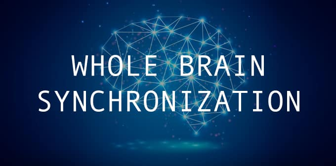 Whole Brain Synchronization