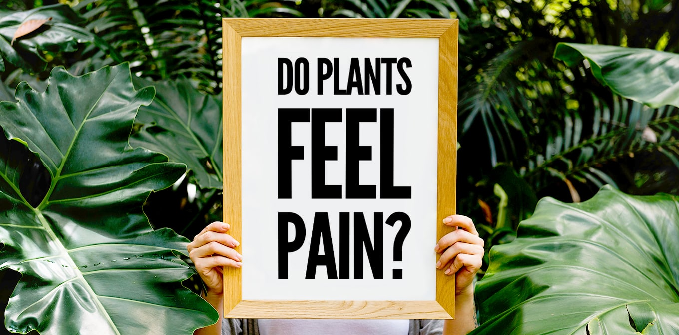 Do Plants Feel Pain?