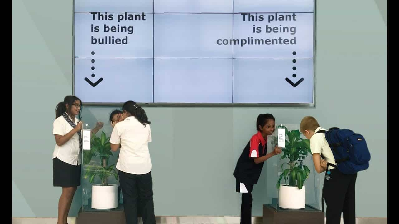 Bully A Plant_ Say No To Bullying